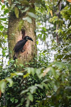 BIRD - hornbill feeding wife and kids-5121