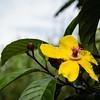 RIVERSCAPE - flower-5218