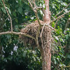 BIRD - eagle in nest -5375