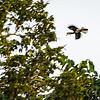 BIRD - hornbill-5509