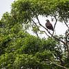 BIRD - -5202