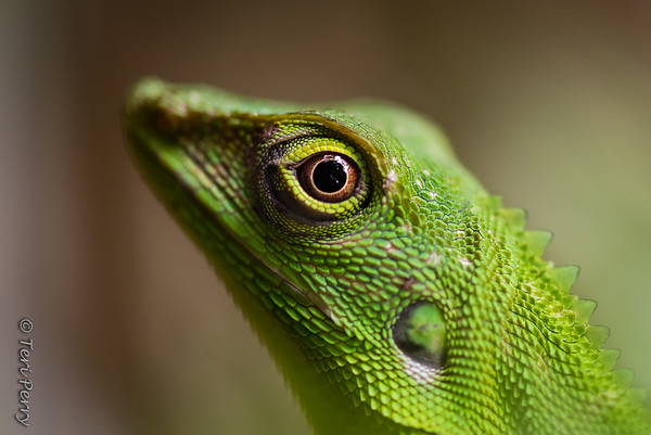 LIZARD - green-5439