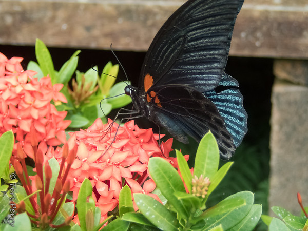 INSECT - butterfly-9280041