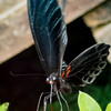 INSECT - butterfly-9280047