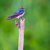 BIRD --5153