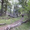 Forest walk at El Chalten