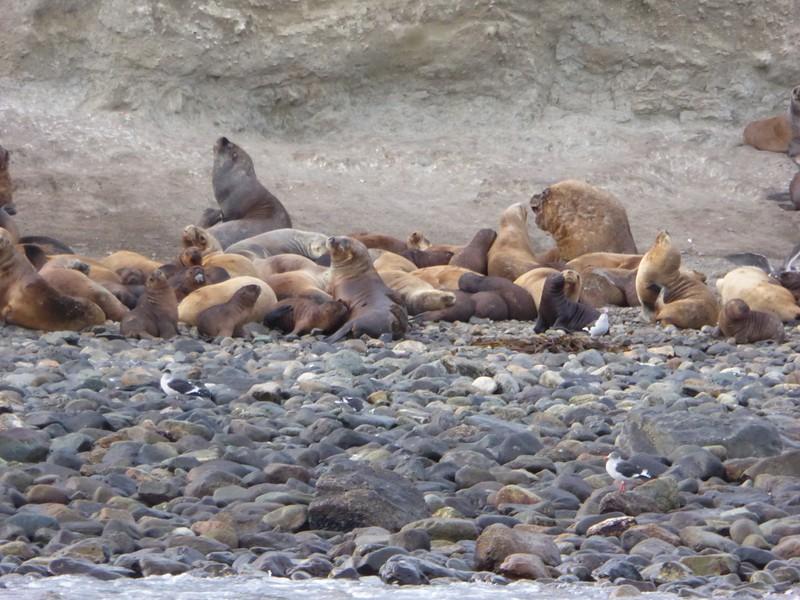 Sea Lion colony on Marta Island