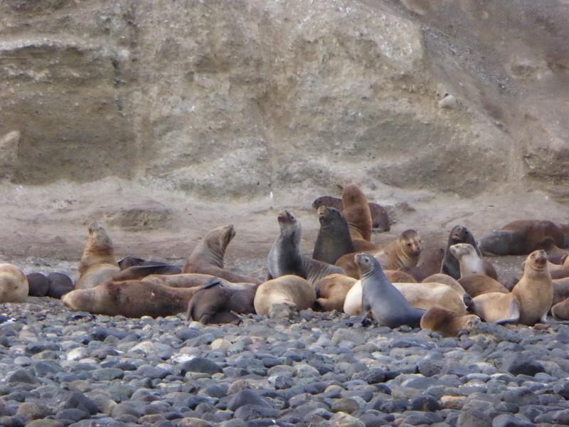 Sea Lions on Marta Island