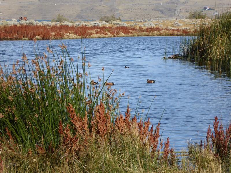 Wetlands, El Calafate