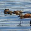 Waterfowl at Laguna Reserva Nimez