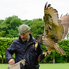 At Donrobin, we saw a slick, informative and humorous falconry demonstration by Andy Hughes, the resident falconer at Donrobin.  Here he is shown with an Eagle Owl that is native to Northern Europe.  He is feeding a dead chick to the owl as a reward.