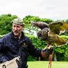 At Donrobin, we saw a slick, informative and humorous falconry demonstration by Andy Hughes, the resident falconer at Donrobin.  Here he is shown with an Eagle Owl that is native to Northern Europe.  He is about to pull a dead chick out of his bag as a reward.