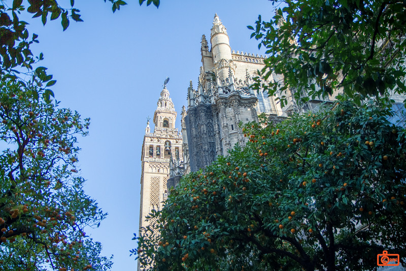 The bell tower of the Cathedral of Seville from the courtyard with orange trees.