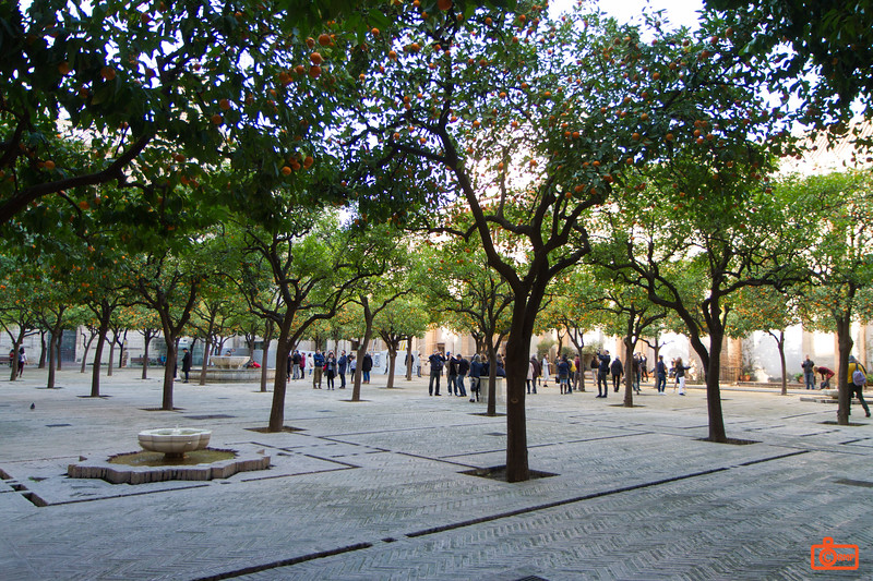 The courtyard of the Cathedral of Seville. This was originally the washing area for the Moorish mosque. It is full of orange trees, but the oranges are bitter.