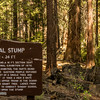 Note the last line on the description board for the Centennial Stump - what a great place for children to learn about a loving, wise, and all-powerful God!