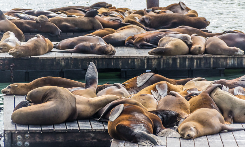 How do you not love the face of a contented sea lion? Its the rest of them that's...