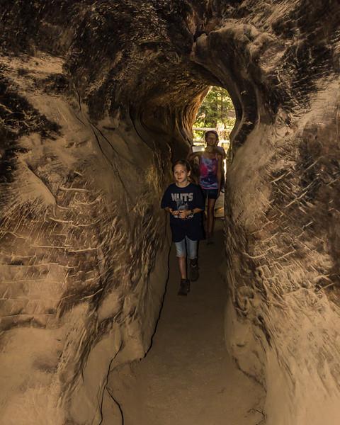 Walk Through a Sequoia!