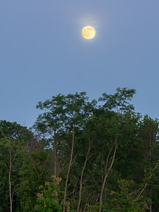 Summer solstice full moon, Cuyahoga Valley National Park