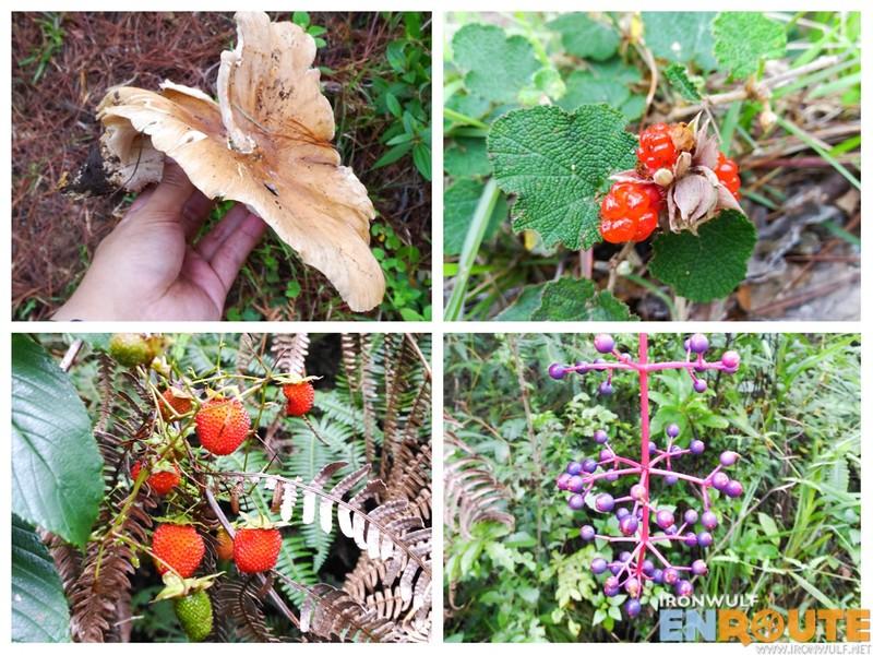 Clockwise: edible mushroom, berries, pinit (wild strawberries) and parangfang