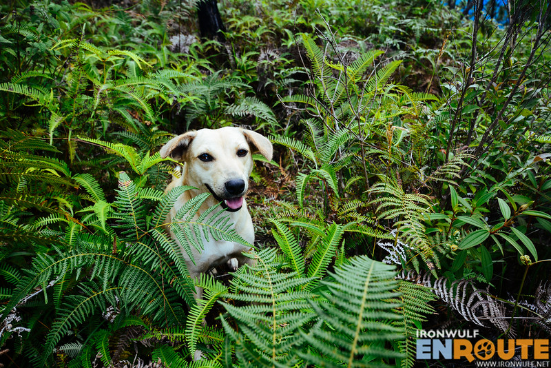 Misty playfully emerging from the ferns