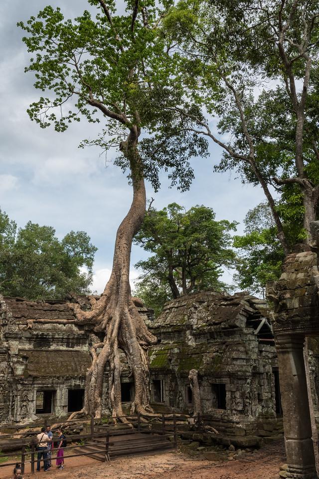 Ta Prohm - 11c Buddhist Angkor-area temple
