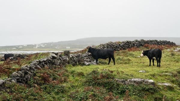 , Inis Mor, Aran Isles, Ireland