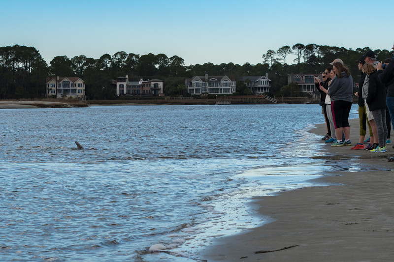 People watch the dolphins feeding in the straight at the west end of Kiawah Island.