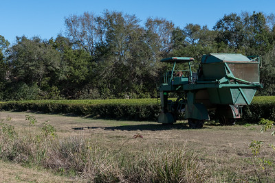 The custom-built one-of-a-kind harvester used at Charleston Tea Plantation.