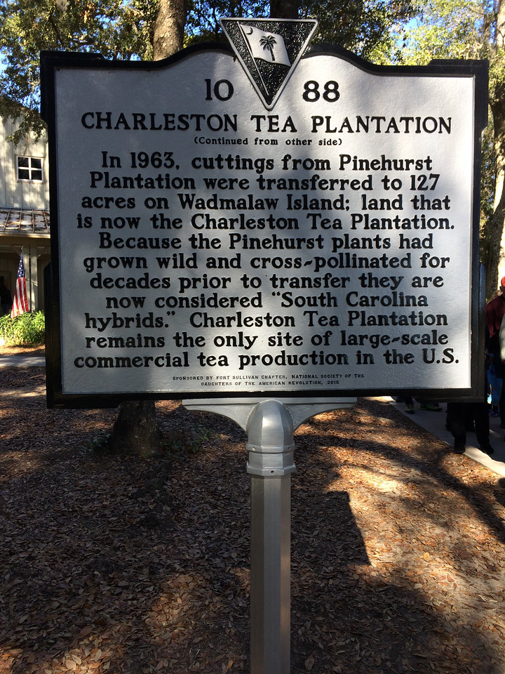 The Charleston Tea Plantation, the only tea farm in North America.