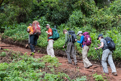 The trekkers make their way up the forested trail.