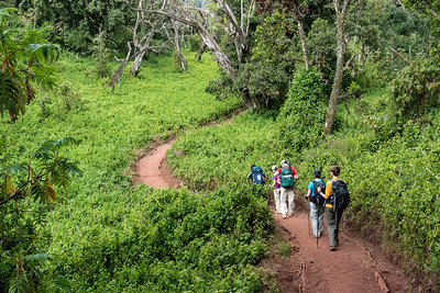 Our trek begins in the forested slopes of the Lemosho Route.