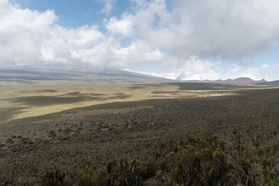 Our first look at the Shira Plateau - with Kilimanjaro hidden in the clouds beyond.