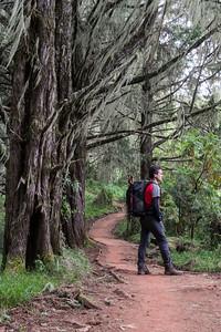 David pauses on the forested trail.