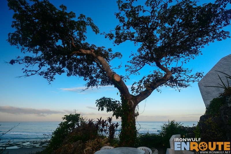 The scenic tree