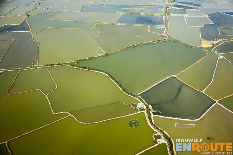 Beautiful pattern of the green fields