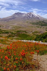 Mt St Helens Wildflowers July 2016