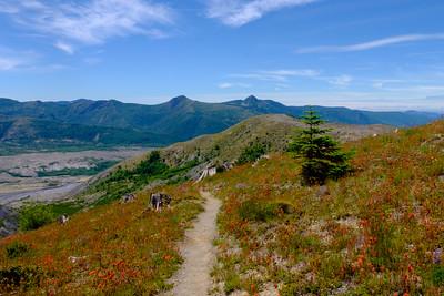 Mt St Helen's Hiking Trail