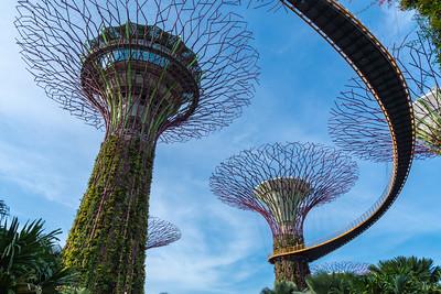 """""""Supertrees"""" at Marina Bay Gardens - Singapore."""