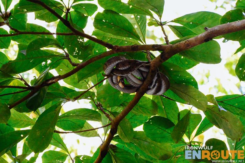 Resident snake in slumber
