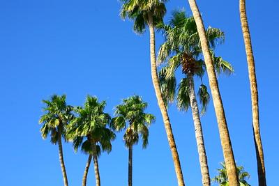 2016.01.28-02.02 Palm Springs, CA; Salton Sea, CA