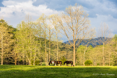 Sparks Lane, Cades Cove, Great Smokies National Park