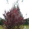 Sagrada Familia Temple seen from park across the street