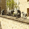 Well wired monkeys at Tower of London