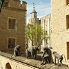 Well wired monkeys outside gift shop for Crown Jewels
