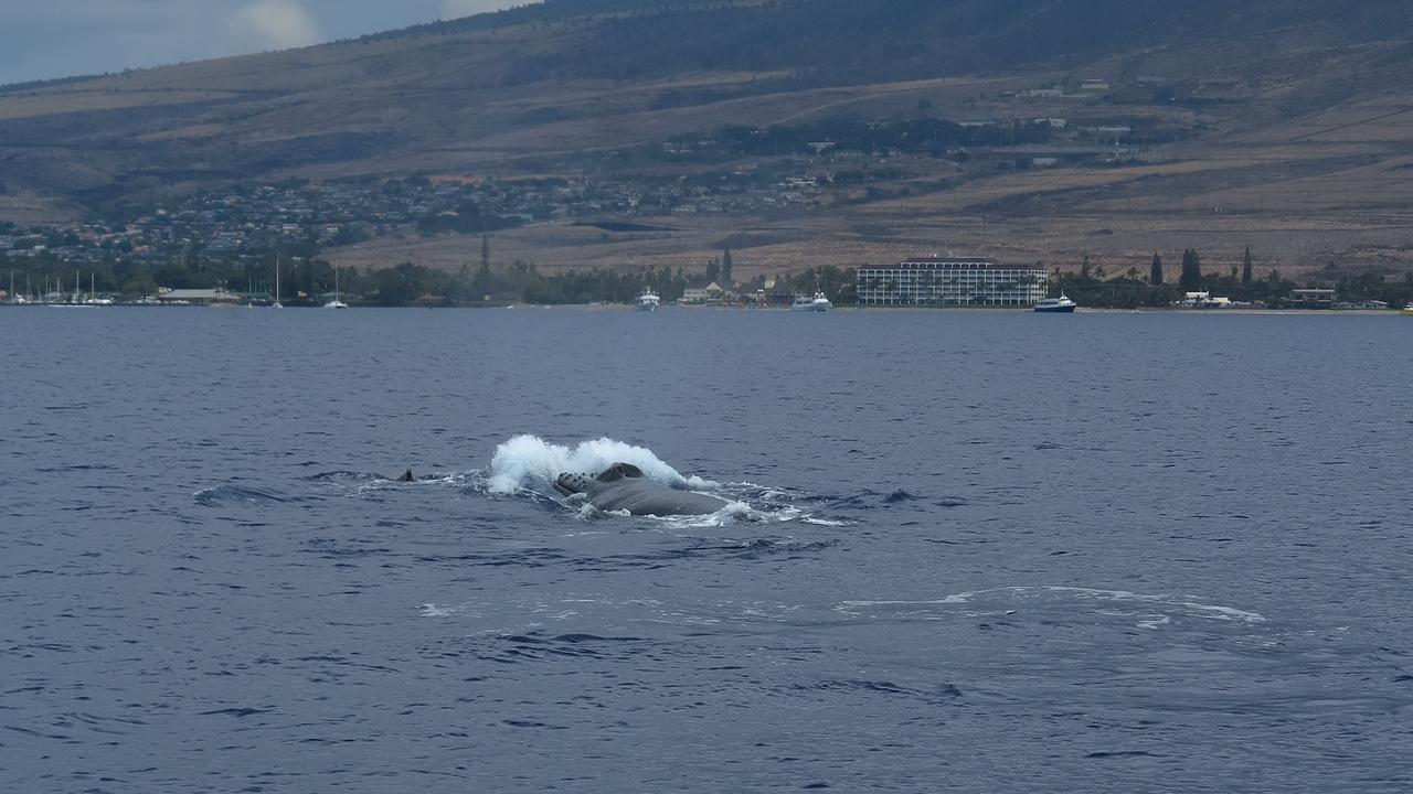 Pacific Whale Foundation tour