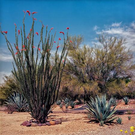 2017-03 Tucson