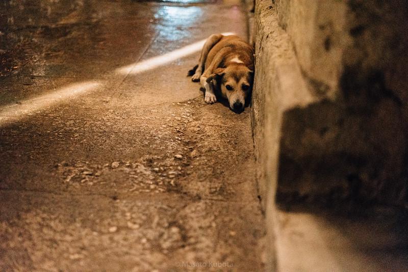 Orisha protects dogs - Plaza de Armas, Havana, Cuba, November 2017