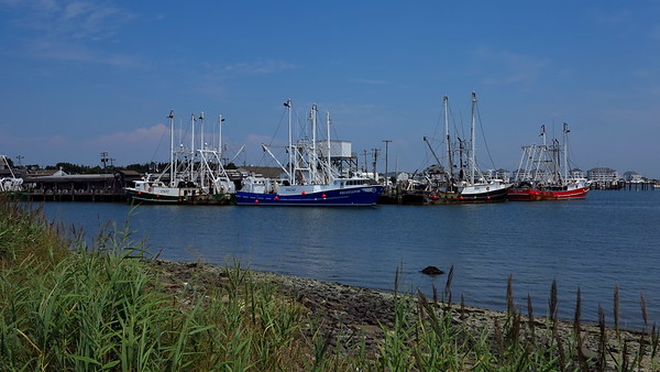 Cape May Harbor