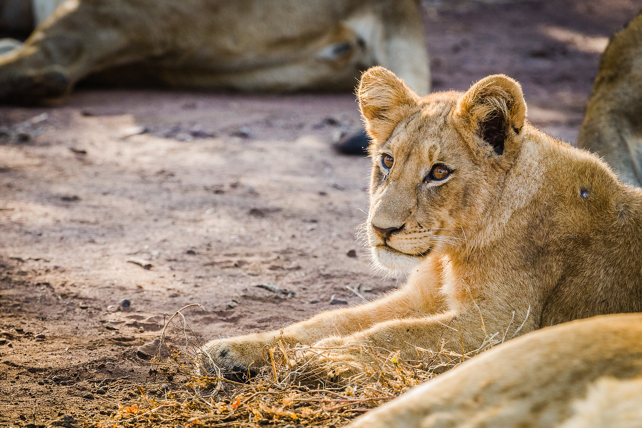 20170619 Family Africa Trip 2535