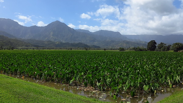 Hanalei National Wildlife Refuge